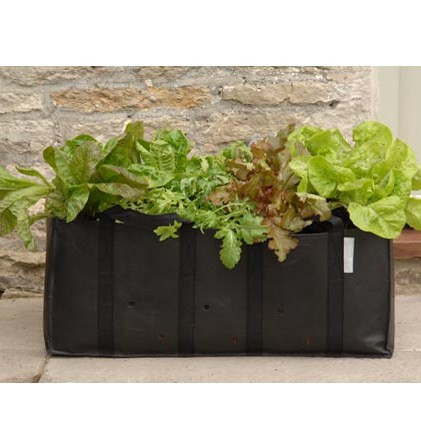 An image of Salad Planting Bag